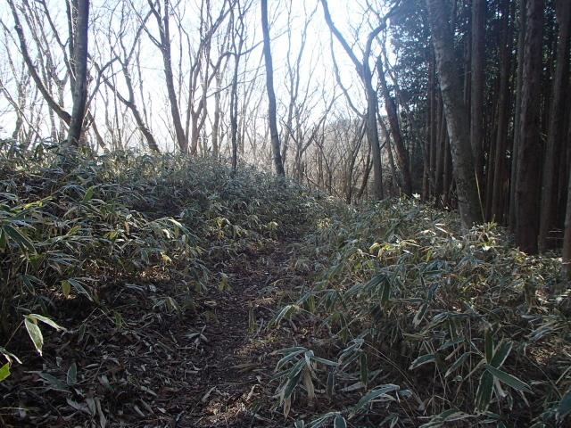 1.7笹原の道.JPG
